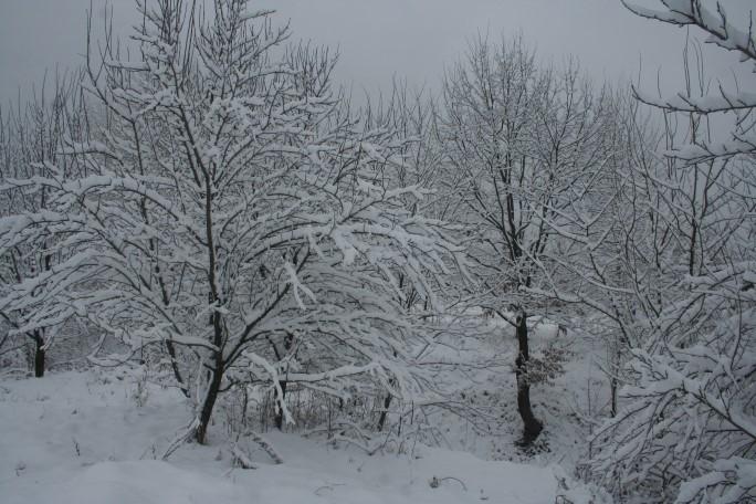 Iarna la țară