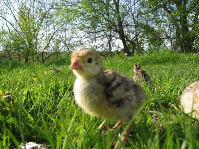 practici tradiționaleşi ecologice în legumicultura ecologică