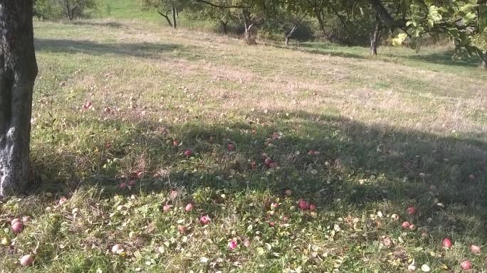 La cules de mere